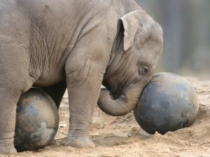 Dear baby elephant, sorry we're so stupid.